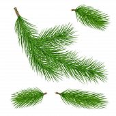 Pine Tree Branches. Christmas Fir Tree Branch. Vector Xmas Decorarion Elements. Illustration Of Pine poster