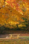 Tranquil picnic table in the autumn