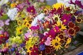 pic of profusion  - Flowers for sale at the Farmer - JPG