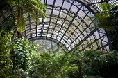 Inside the Botanical Building in Balboa Park in San Diego, California.  Inside are over 350 species of plants.