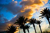 stock photo of florida-orange  - beautiful sunset sky with palm trees - JPG