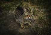 Cat. Cat Lies On The Ground. Funny Cat Closeup. Portrait Of A Cat. A Domestic Cat Lying On The Groun poster