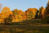 Autumn Trees In Sunny Autumn Park Lit By Sunshine - Sunny Autumn Landscape In Bright Sunlight. Autum poster