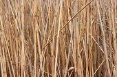 Reed Hintergrund