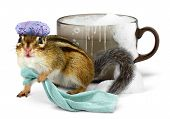 stock photo of washtub  - Funny chipmunk taking a bath in cup - JPG