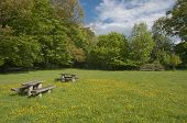 Picnic Table In Blooming Meadow