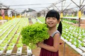 foto of hydroponics  - Little child is holding vegetable in hydroponic farm - JPG