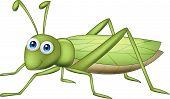 Grasshoppher cartoon