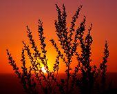 Desert Plant Silhouette At Sunset