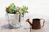 plant with a watering can