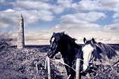Pair Of Wild Irish Horses And Ancient Round Tower