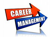 Career Management In Arrows