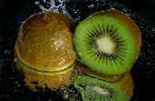 Kiwi Dousing With Water