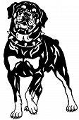 Rottweiler black white