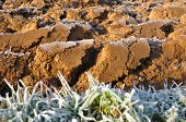 Clods Covered By Frost