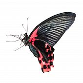 pic of color spot black white  - Tropical red and black  - JPG