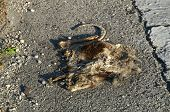 image of opossum  - Low angle view of a flattened dead opossum on the side of the road  - JPG