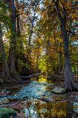 Early Morning Sunrise on Fall Foliage Surrounding Cibolo Creek, Texas.