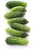 gherkin, garden fresh cucumbers isolated on white background