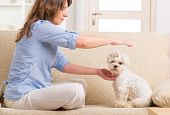 pic of qigong  - Woman doing Reiki therapy for a dog - JPG