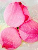 Macro Pink Lotus Blossoms