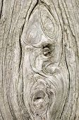Wood texture.