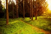 Mystical Dense Forest With A Footpath Shimmering Sunlight.