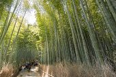 KYOTO - April 26 : Famous Arashiyama bamboo forest path with tourists on April 26, 2014 in Kyoto, Ja