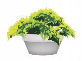 Illustration of Evergreen Plant in Flower Pot