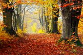 Autumn, fall forest. Natural path towards light of afternoon sun. Red leaves, romantic mood.