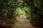 green alley with rural footpath