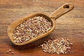 roasted buckwheat kasha on a rustic wooden scoop against grunge wood