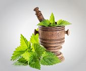 fresh nettle leaves with a mortar on a white background