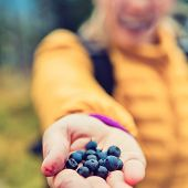 Woman Hand Giving Blueberries Autumn Forest