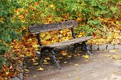 Wooden bench at park in autumn time