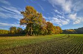 The Bavarian fields