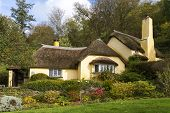 Thatched Roof Cottage In Selworthy