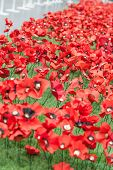 stock photo of tribute  - Handmade Poppies at the Imperial War museum - JPG