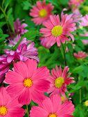 Flowers  Decorative