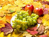 grape and apple on autumn leaves background