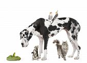 Group Of Pets In Front Of White Background, Studio Shot