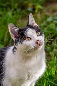 foto of incredible  - White stray cat with black spots and incredible green eyes - JPG