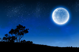 picture of moon silhouette  - Silhouette of tree against night sky and full moon - JPG