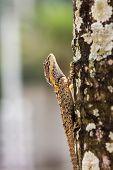 stock photo of chameleon  - a cute Chameleon  - JPG