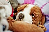 picture of toy dogs  - Toy dog with big cheerless eyes between other toys.