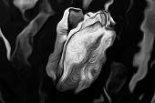 stock photo of art gothic  - Gothic art Tulip - JPG
