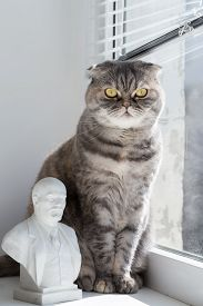 image of lenin  - Cat sits on a window sill and looking out the window - JPG