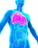 stock photo of larynx  - Human Respiratory System Illustration  - JPG