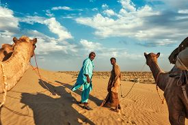 picture of camel  - Rajasthan travel background  - JPG