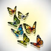 beautiful vector illustration with colorful butterflies